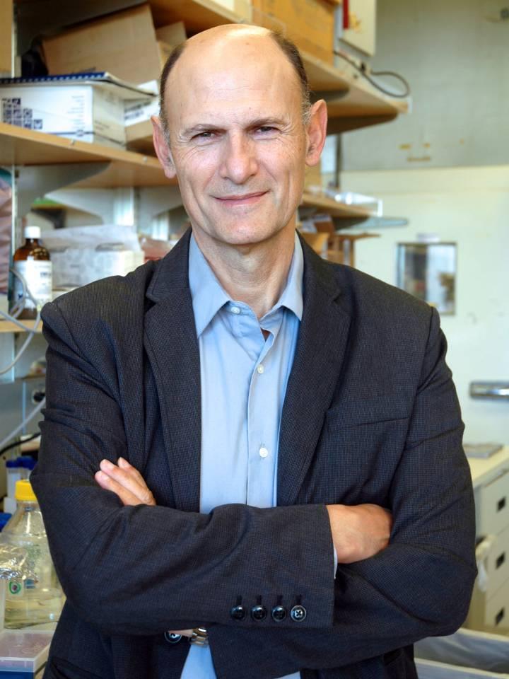 GS. Juan Carlos Izpisúa Belmonte, người đứng đầu nhóm nghiên cứu về chimera. Nguồn: El País.