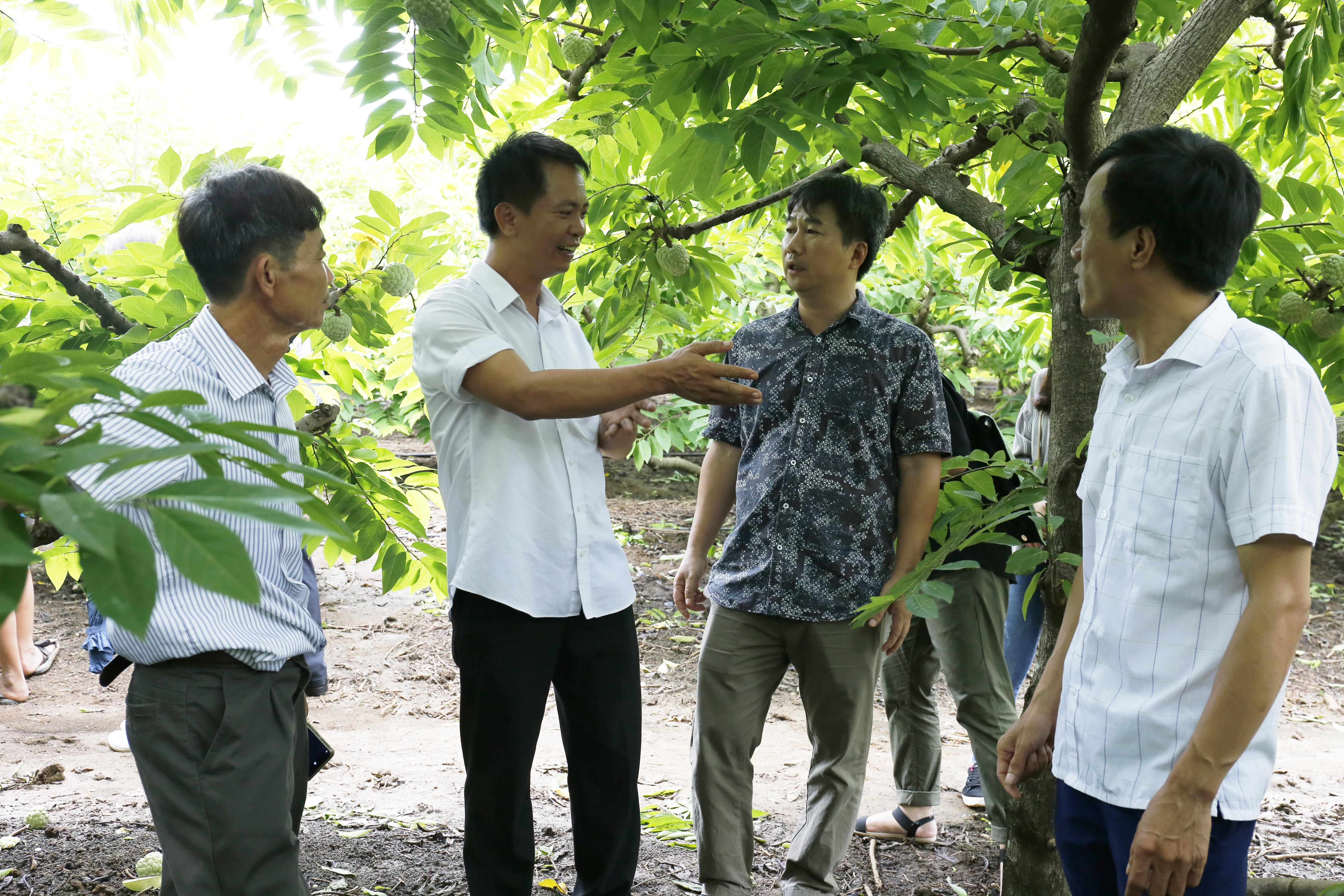Sở KH&CN Sơn La đã hướng dẫn quy trình kiểm soát chất lượng nội bộ nhãn hiệu na Mai Sơn ở hợp tác xã Mé Lếch, xã Cò Nòi, huyện Mai Sơn– một trong những nơi đang sử dụng nhãn hiệu chứng nhận này.