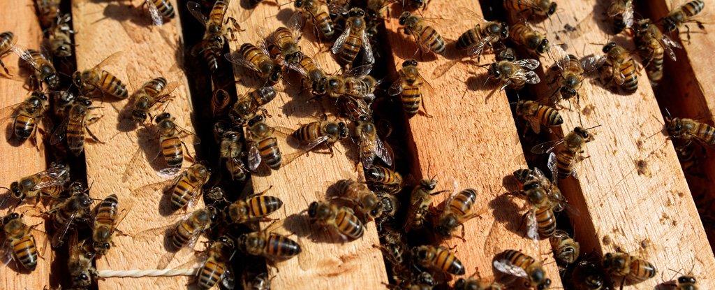 Tổ ong mật châu Âu tại Sao Roque, Brazil. Ảnh: Patricia Monteiro/ Bloomberg
