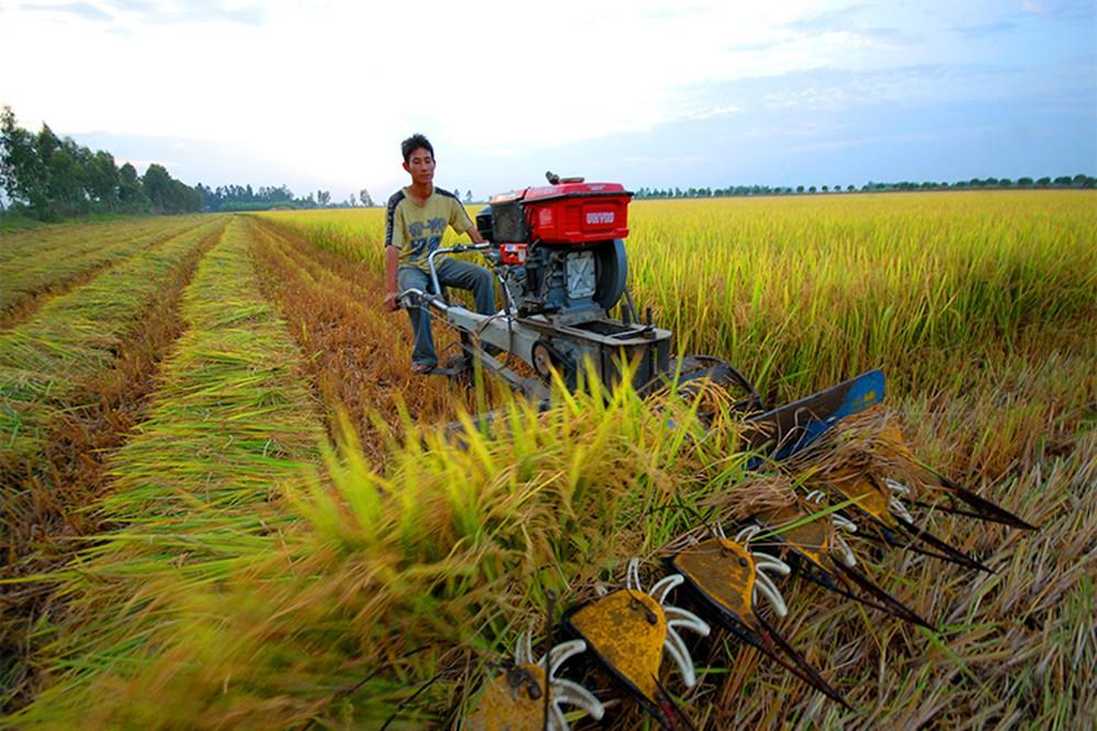 Ứng dụng công nghệ cao trong sản xuất nông nghiệp tại ĐBSCL