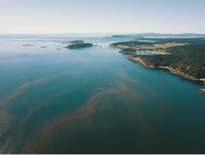 Ngành nuôi trồng thủy sản thế giới (trong đó có nuôi cá hồi) chịu khá nhiều thiệt hại do tảo và các sinh vật phù du gây ra trong những năm gần đây. Ảnh: Internet.
