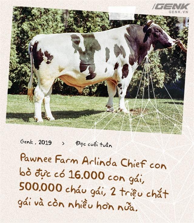 Đọc cuối tuần: Nước Mỹ có 9 triệu con bò sữa, nhưng tất cả chỉ là con cháu của 2 con bò đực - Ảnh 10.