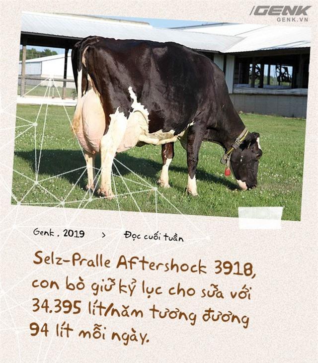 Đọc cuối tuần: Nước Mỹ có 9 triệu con bò sữa, nhưng tất cả chỉ là con cháu của 2 con bò đực - Ảnh 3.
