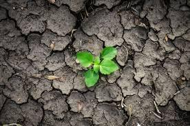 Các loại thảm thực vật khác nhau giúp cứu đất khỏi xói mòn do mưa và phong hóa - Ảnh: ISO Republic