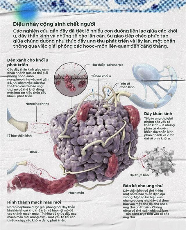 Điệu nhảy cộng sinh của ung thư và hệ thần kinh: Y học đang bước chân vào một miền đất hứa mới - Ảnh 6.