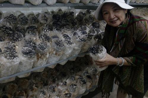 Nấm bào ngư sản xuất trên quy mô công nghiệp ở Việt Nam | Nguồn: VNE