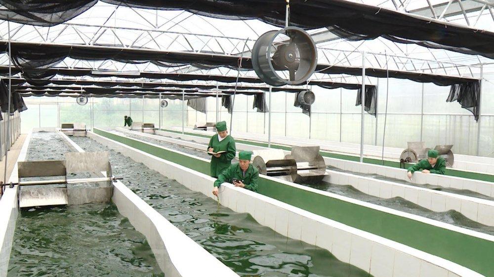 Bể nuôi tảo xoắn Spirulina của Học viện Nông nghiệp, Học viện đã chuyển giao quy trình nghiên cứu và sản phẩm này cho một số công ty trong nước. Ảnh: VTC.