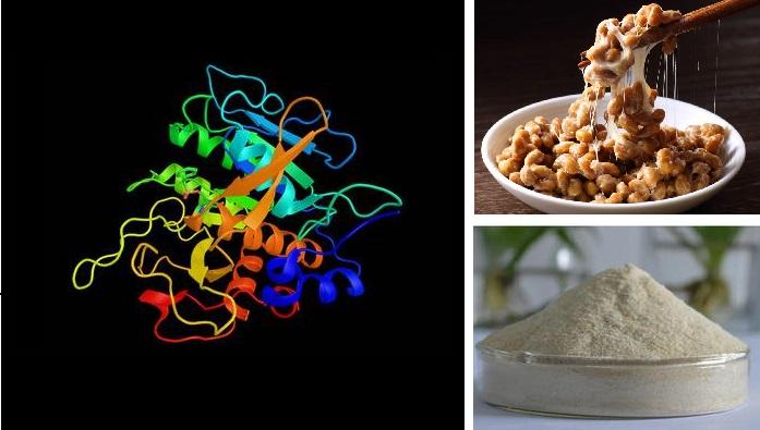 Cấu trúc Nattokinase (trái) được tìm thấy trong món đậu tương lên men Natto của Nhật (trên), và hiện thường được sản xuất thành dạng bột enzyme tái tổ hợp trên quy mô công nghiệp (dưới)