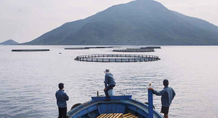 Trại nuôi cá chẽm của Australis tại vịnh Vân Phong, Khánh Hòa. Ảnh: Australis Aquaculture.