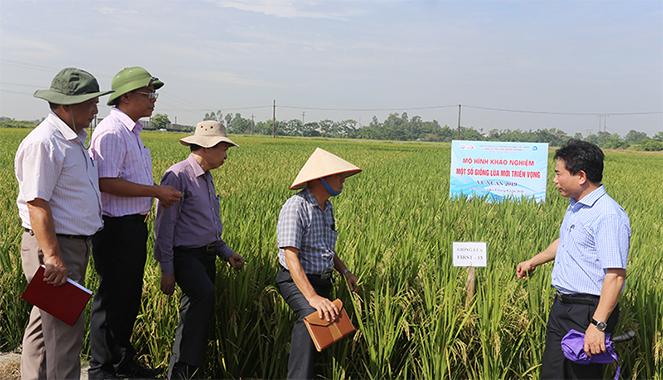 Đoàn cán bộ Dự án FIRST đi kiểm tra việc thực hiện tiểu dự án của Viện Di truyền nông nghiệp. Nguồn: Viện Di truyền nông nghiệp
