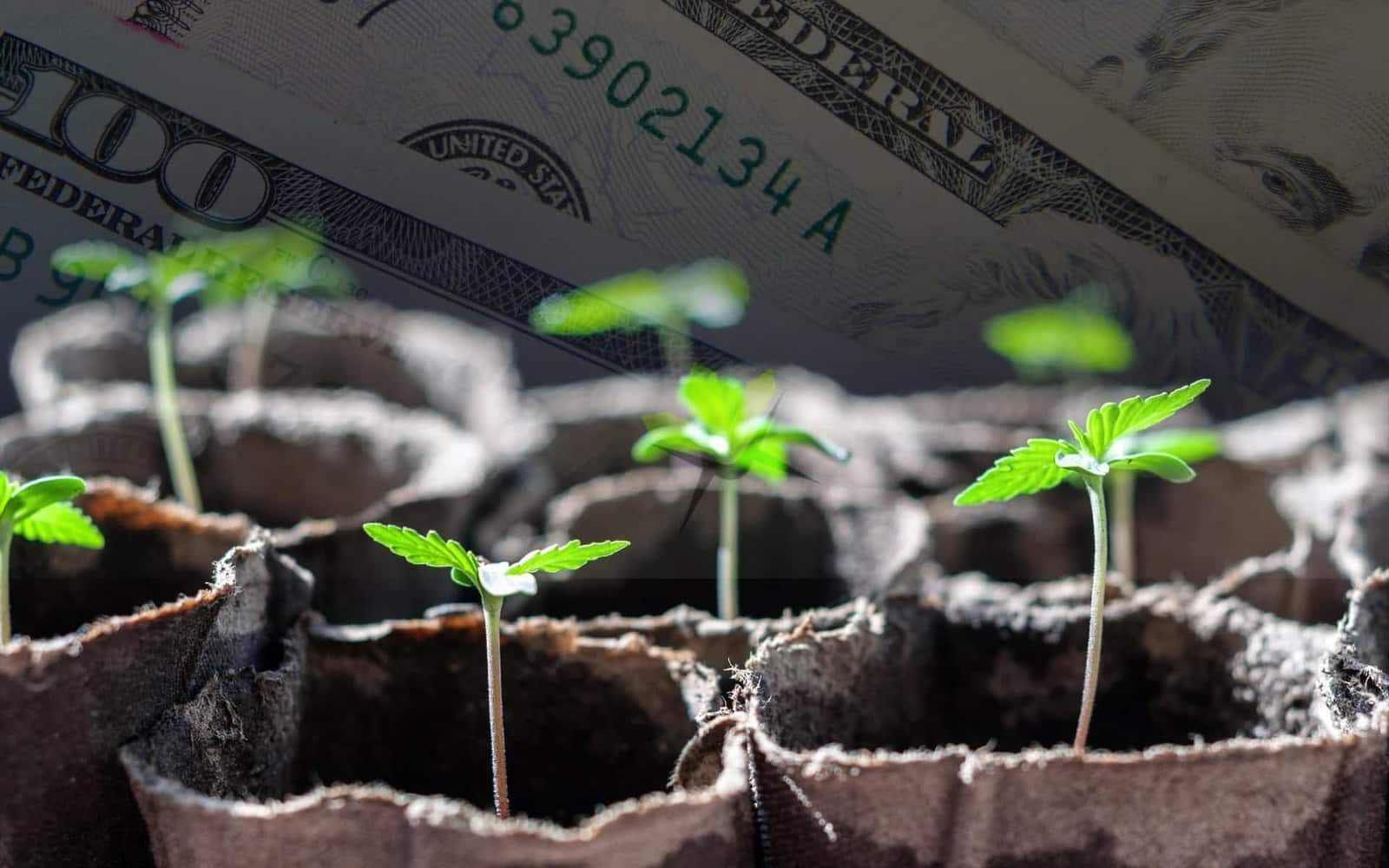 Đầu tư vào startup Việt năm 2019
