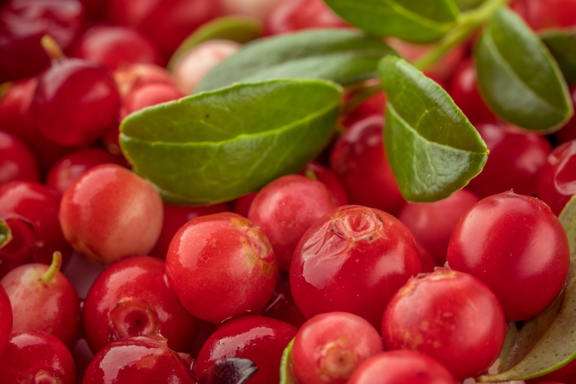The lingonberry is native to the boreal forest and Arctic tundra throughout the Northern Hemisphere, from Eurasia to North AmericaEvgeniy_Bobkov/Depositphotos