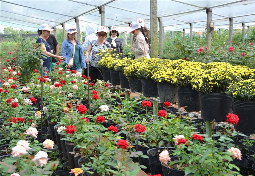 """Một vườn hồng vừa """"độc"""" lại vừa """"dị"""" bậc nhất Làng hoa Sa Đéc. Đó là vườn hồng của anh Tư Thắng  - một người nông dân Nam Bộ. Vì trên diện tích hơn 6.000m2, anh Thắng chỉ trồng toàn loại hồng """"bô lão"""". Cây có tuổi đời nhỏ nhất cũng tầm 3 năm tuổi, có cây lên đến gần 40 tuổi. Với gần 70 giống hồng được tuyển chọn từ các loại hồng """"độc"""" trong và ngoài nước, vì vậy, hồng ở đây không chỉ đa dạng về sắc mà phần lớn lại có mùi thơm rất quyến rũ."""