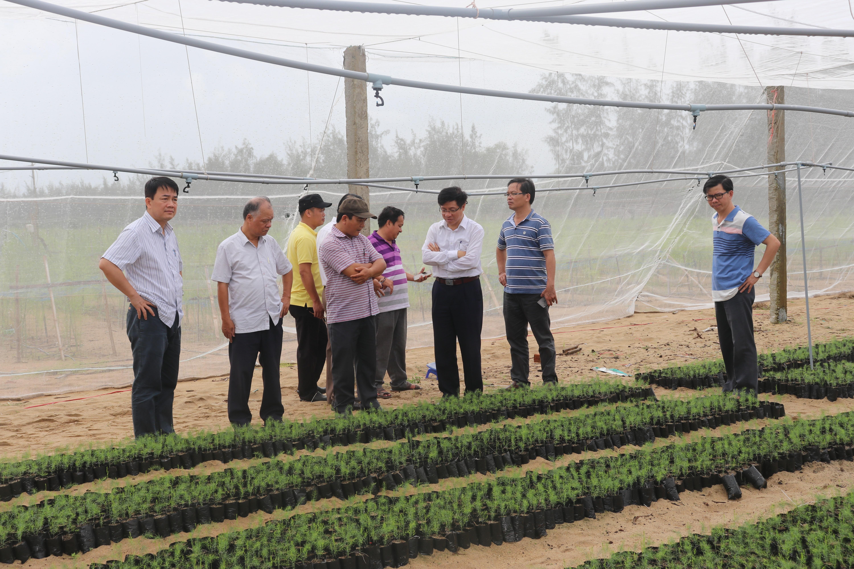 Đoàn cán bộ VINATOM đi thực địa tại khu vực trồng măng tây, nha đam ở huyện Mộ Đức (Quảng Ngãi), nơi sẽ ứng dụng phân bón hữu cơ vi lượng đất hiếm, oligochitosan. Nguồn: VINATOM