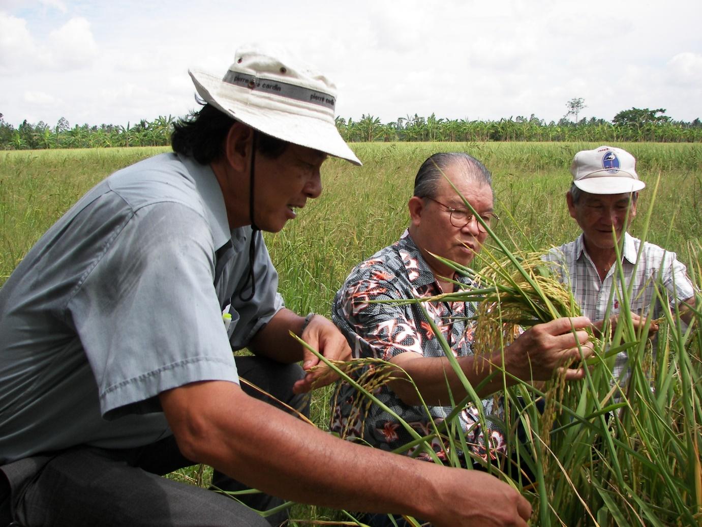 Giáo sư Võ Tòng Xuân và ông Hồ Quang Cua trên cánh đồng lúa thử nghiệm.