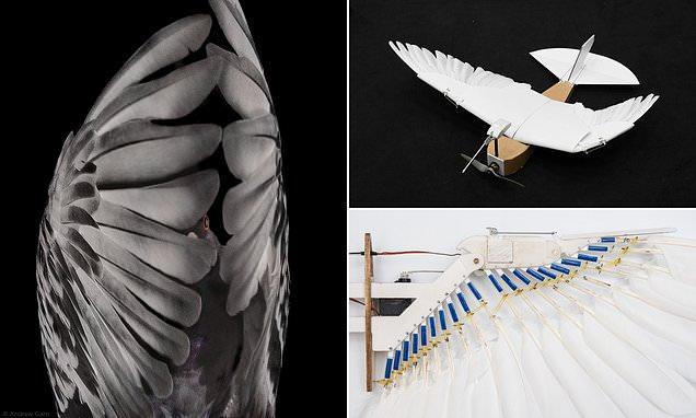 Dựa trên cấu tạo và đặc điểm của lông bay ở các loài chim, nhóm nghiên cứu đã trang bị cho PigeonBot một đôi cánh đặc biệt. Ảnh: Stanford.