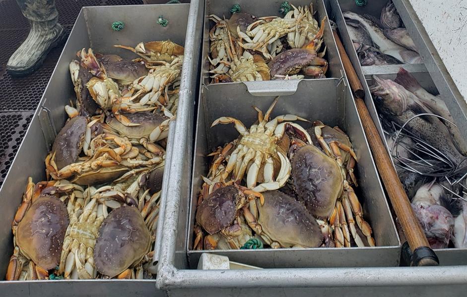 Loài cua đang bị đe dọa nghiêm trọng do tình trạng axit hóa đại dương. Ảnh: NOOA.