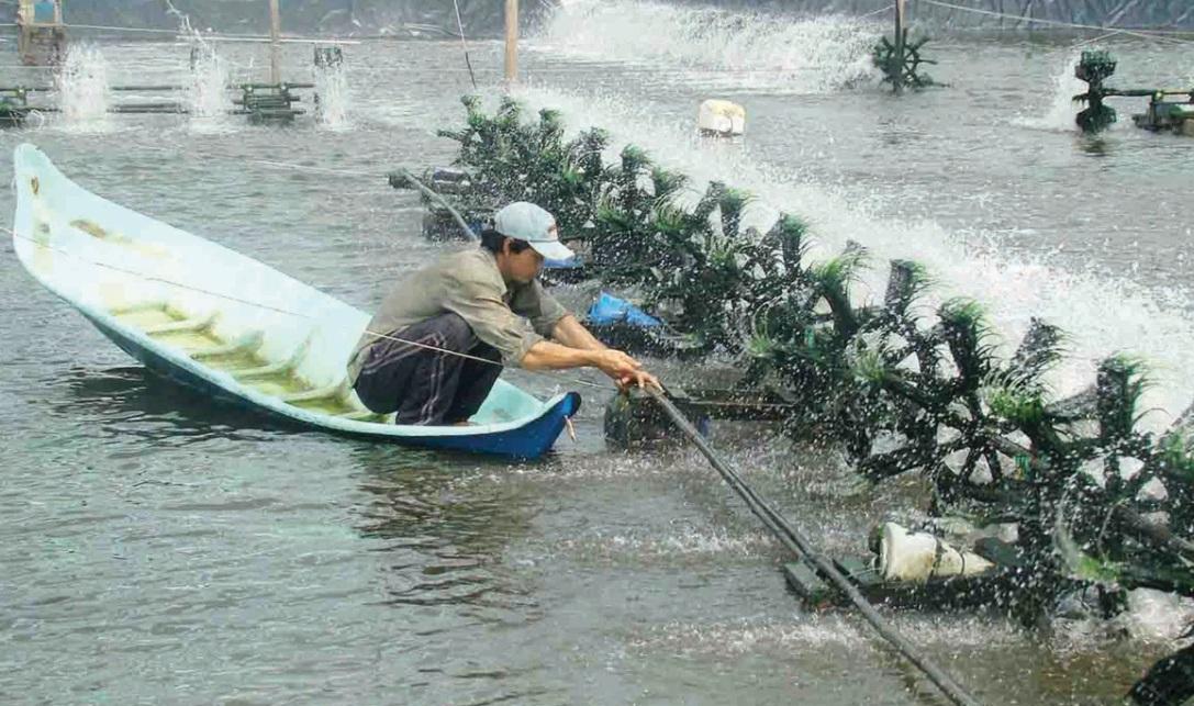 Nhiễm độc kim loại đồng ở mức dưới vài lần so với ngưỡng cho phép của Việt Nam đã làm suy giảm 60-70% lượng giáp xác chân chèo, sẽ dẫn đến suy giảm nghiêm trọng nguồn thức ăn của tôm cá, ảnh hưởng tới nguồn lợi thủy sản.