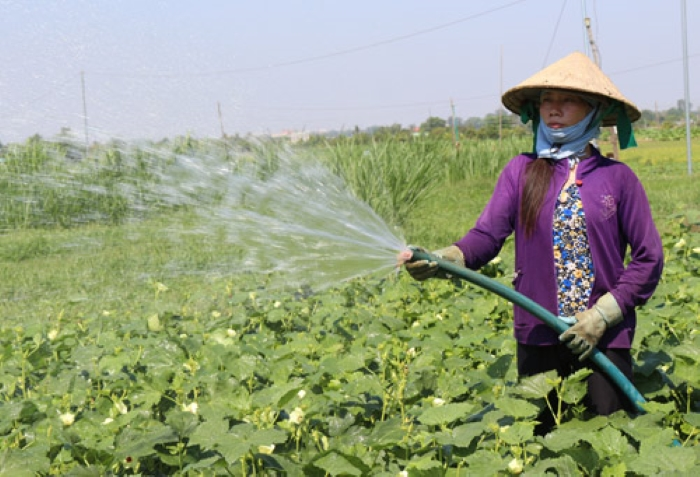 Cách thức cung cấp nước cho cây trồng hiện nay khá đa dạng tùy thuộc vào từng mô hình và từng loại cây. Ảnh: Q.Nhiên