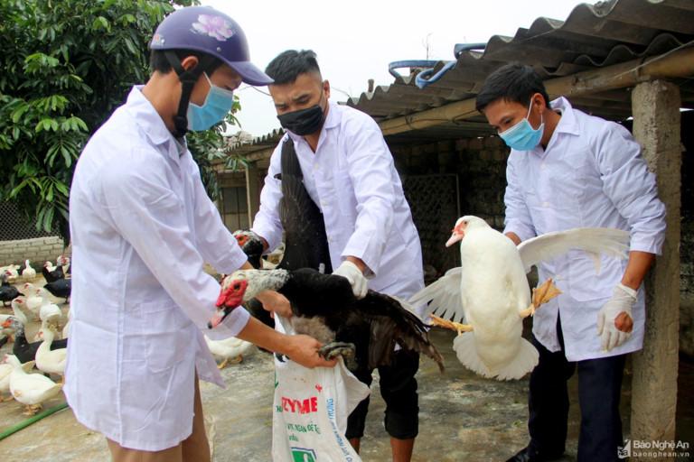 Theo Cục Thú y, Bộ NN&PTNT, tính đến ngày 11/2, cả nước có 10 ổ dịch cúm gia cầm do chủng virus A/H5N6 gây ra, buộc phải tiêu hủy 43.200 con gia cầm tại 5 tỉnh, thành phố: Bắc Ninh, Hà Nội, Quảng Ninh, Thanh Hóa và Nghệ An.