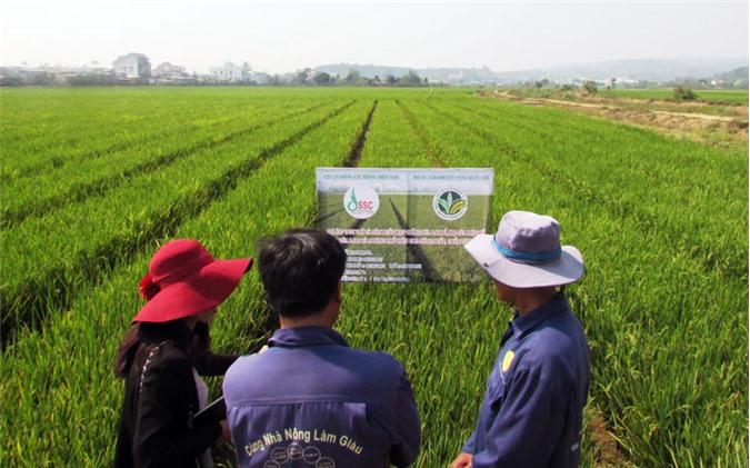 Sản xuất lúa ứng dụng công nghệ cao theo quy hoạch trên địa bàn huyện Lâm Hà.
