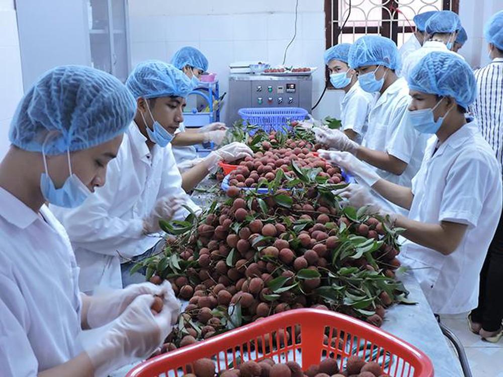 Bảo quản vải theo công nghệ CAS (Cells Alive System) để xuất khẩu.