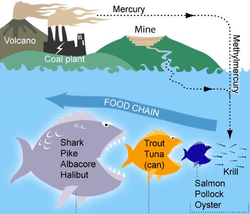 Các độc tố kim loại nặng có trong nước thải công nghiệp có thể gây hậu quả môi trường nghiêm trọng, và phá hủy chuỗi thức ăn tự nhiên. Ảnh: Wikipedia.