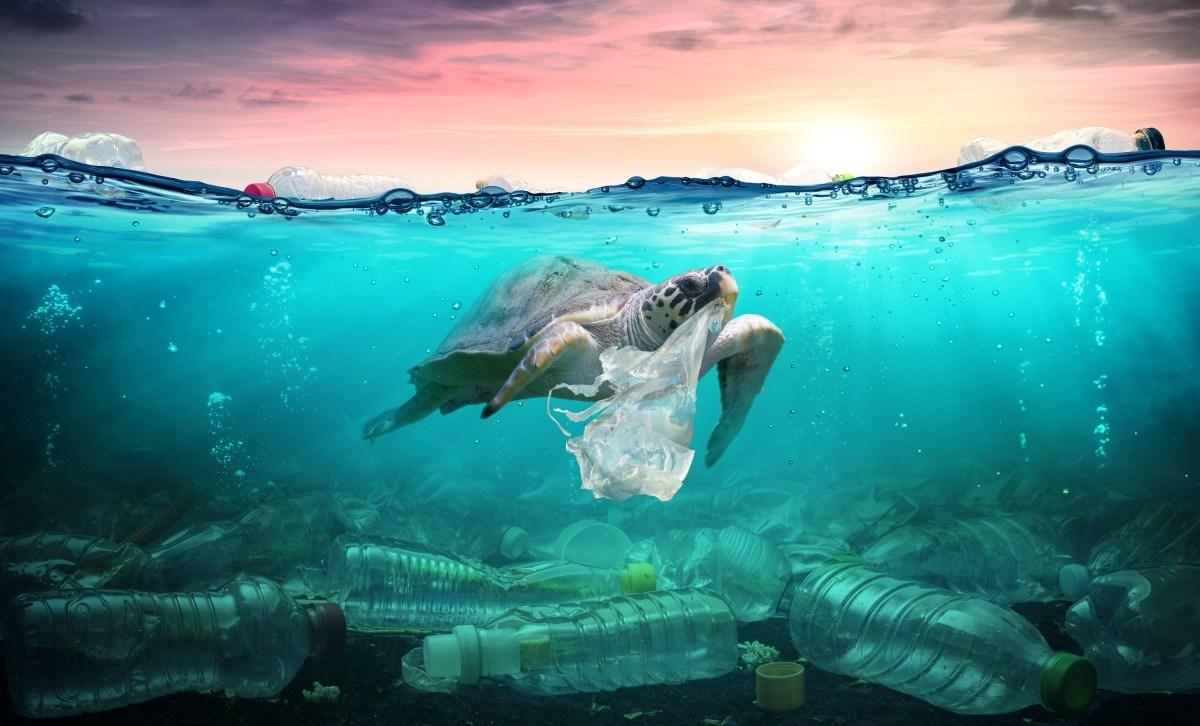 Rác thải nhựa đang tràn ngập trên khắp các đại dương, đe dọa môi trường sống của nhiều loài động vật lẫn hệ sinh thái biển. Ảnh: Bioplastics News.