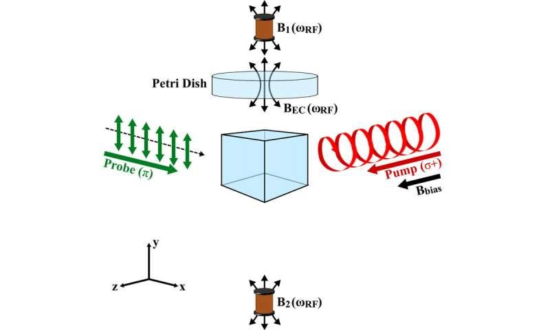 Nguyên lý hoạt động của từ kế nguyên tử. Ảnh: Phys.org.