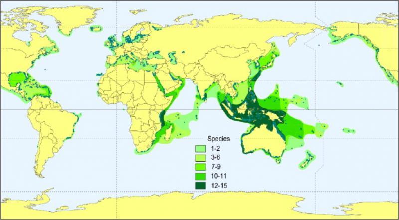 Phân bố các loài cỏ biển trên thế giới.Màu xanh càng đậm biểu thị càng nhiều loài cỏ biển ở khu vực đó. | Nguồn: (Short, F. et al. 2007.)