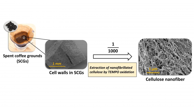 Sợi nanofiber cellulose làm từ bã cafe đã qua sử dụng bằng tiến trình oxyhóa xúc tác có kích thước chiều rộng lên tới 25 nm. Ảnh: