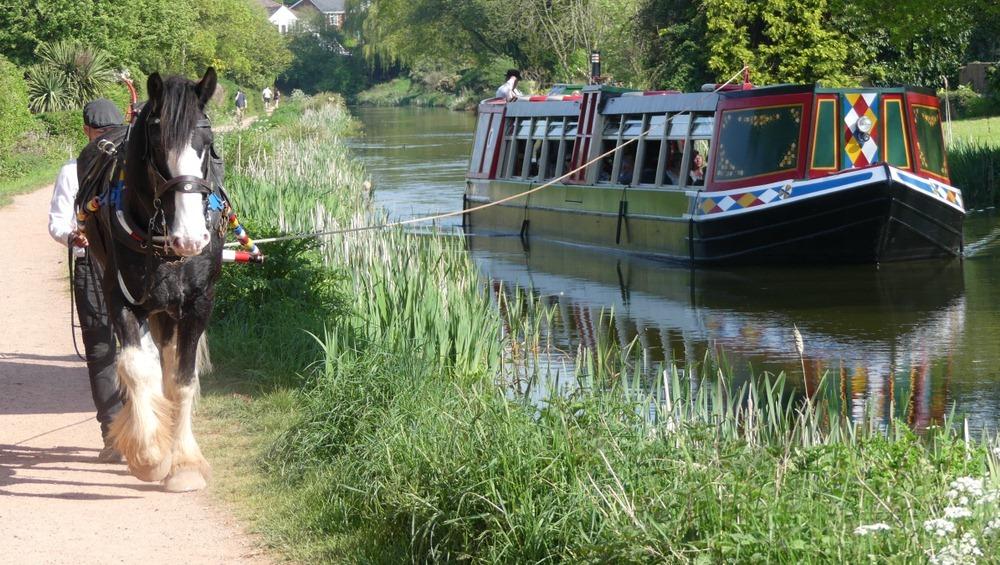 Xà lan ngựa kéo phục vụ du lịch trên kênh Grand Western Canal ở Devon, Anh Quốc. Ảnh: Shutterstock.