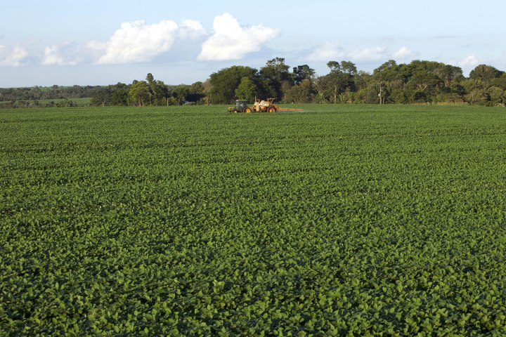Những cánh đồng trồng đậu nành rộng lớn ở Paraguay. Trung Quốc đang rất tích cực đầu tư vào ngành nông nghiệp tại các quốc gia Nam Mỹ để đáp ứng nhu cầu dinh dưỡng của hơn một tỷ dân. Trong đó đậu nành chính là một loại cây trồng quan trọng nhất. Ảnh: World.