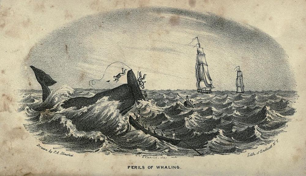 Sự nguy hiểm của nghề săn cá voi, tranh của họa sĩ F. A. Olmstead (năm 1841).