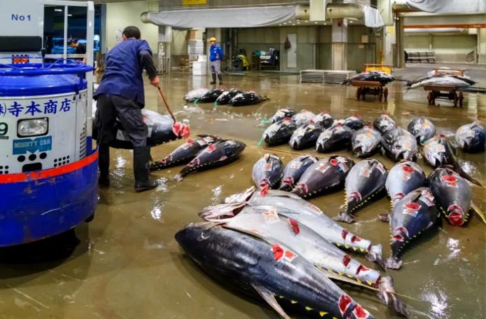 Một vài báo cáo sơ bộ cho biết COVID-19 có nguồn gốc từ động vật sống tại một khu chợ hải sản ở Vũ Hán, Trung Quốc.