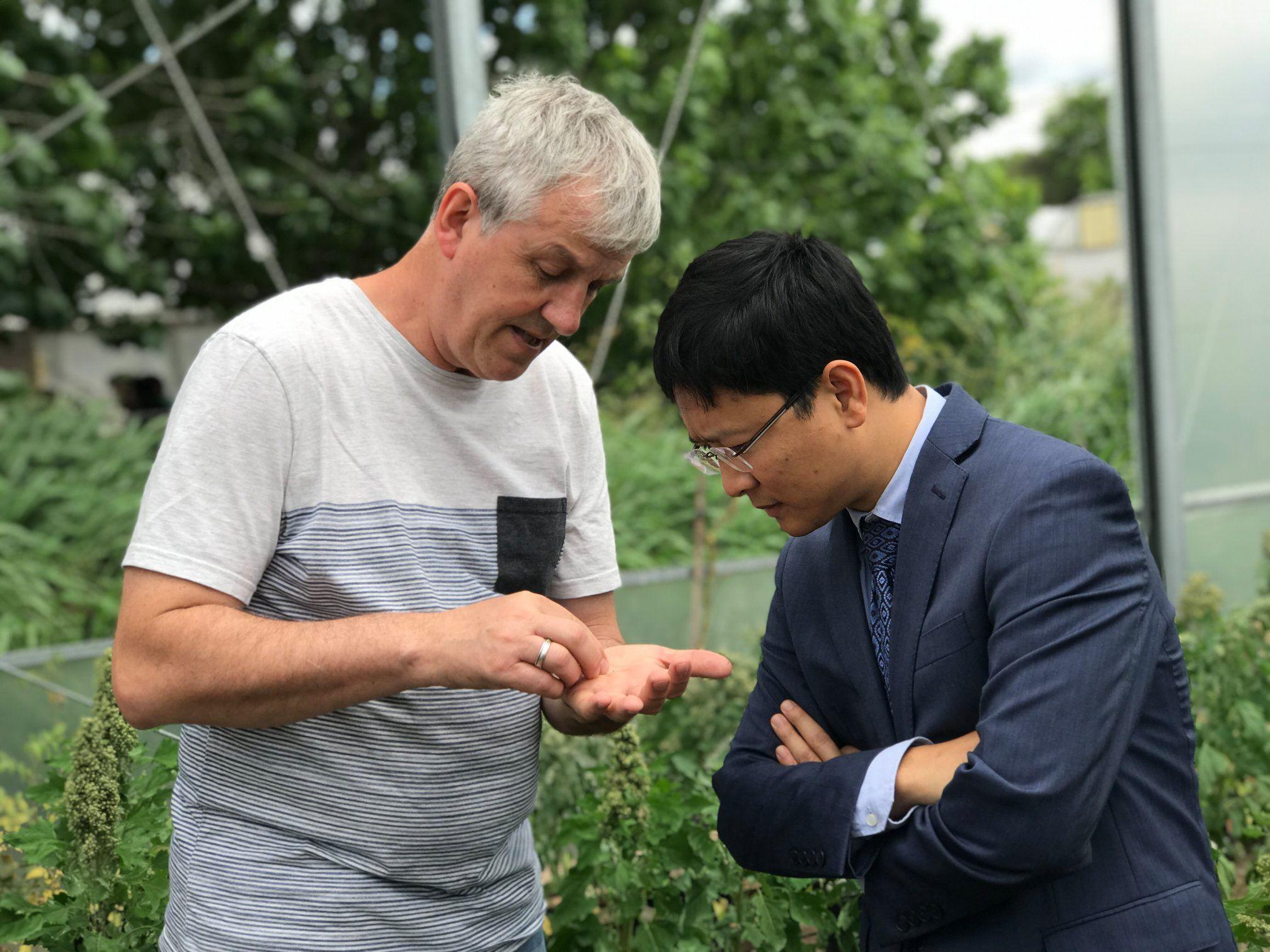 PGS.TS Nguyễn Việt Long (Học viện Nông nghiệp Việt Nam) và GS. Daniel Bertero (ĐH Buenos Aires Argentina) xem xét một trong số các giống diêm mạch trong dự án nghiên cứu. Ảnh: nhóm nghiên cứu cung cấp.