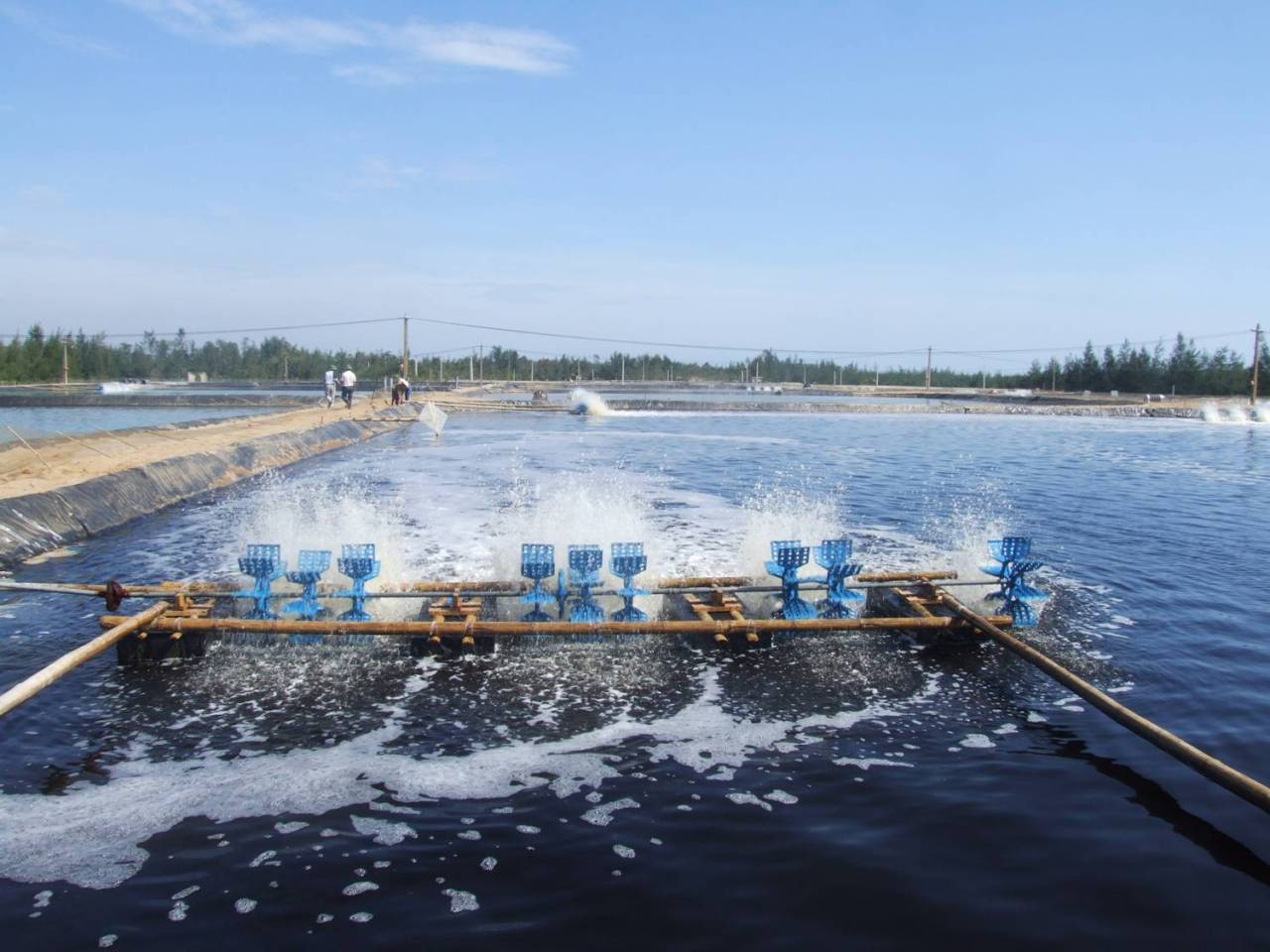 Chế phẩm này rất cần cho các khu nuôi trồng thủy sản. Nguồn ảnh: Thuysan247.