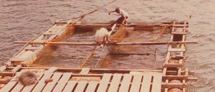 Nuôi cá trong kelong và trap tại Singapore hồi thập niên 1960. Ảnh: AVA.