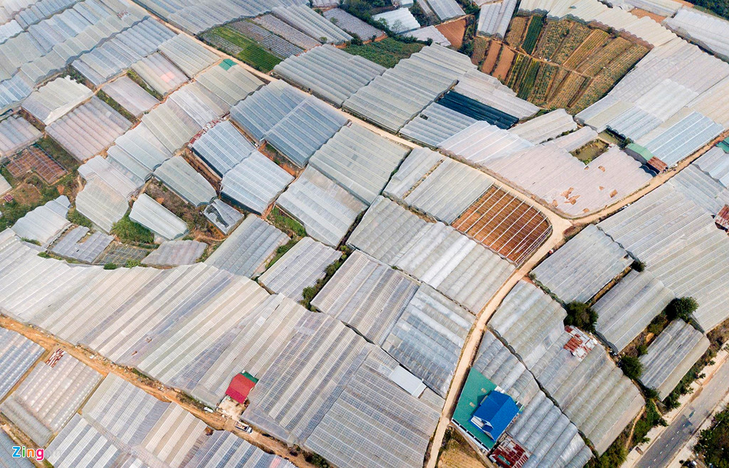 Nhà kính phủ trắng và bủa vây Đà Lạt, phá vỡ cảnh quan và thay đổi hệ sinh thái ở nơi này. Nguồn: Zing.