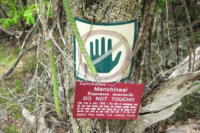 Cây Manchineel thường được dán nhãn cảnh báo để người dân không tiếp xúc quá gần. Ảnh: Flickr.