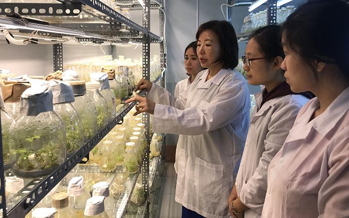 PGS.TS. Trần Thị Thu Hà (thứ 2 từ trái sang) hướng dẫn chuyên môn cho các cán bộ trẻ tại phòng thí nghiệm.