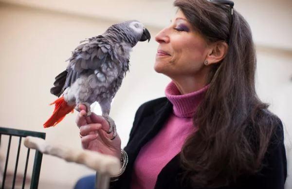 Chú vẹt Griffin và nhà tâm lý học Irene Pepperberg - Ảnh: Stephanie Mitchell