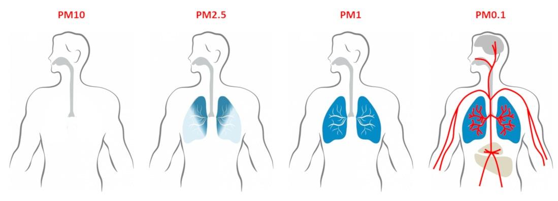 Mức độ xâm nhập của các hạt bụi PM với kích thước khác nhau | Nguồn: Encyclopédie de l'Environnement