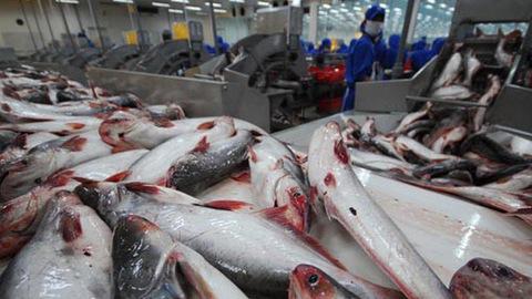 Ngành sản xuất cá tra hoàn toàn có thể nâng cao giá trị nếu các sản phẩm từ loài cá này được tận dụng hiệu quả. Ảnh: Vneconomy.vn.
