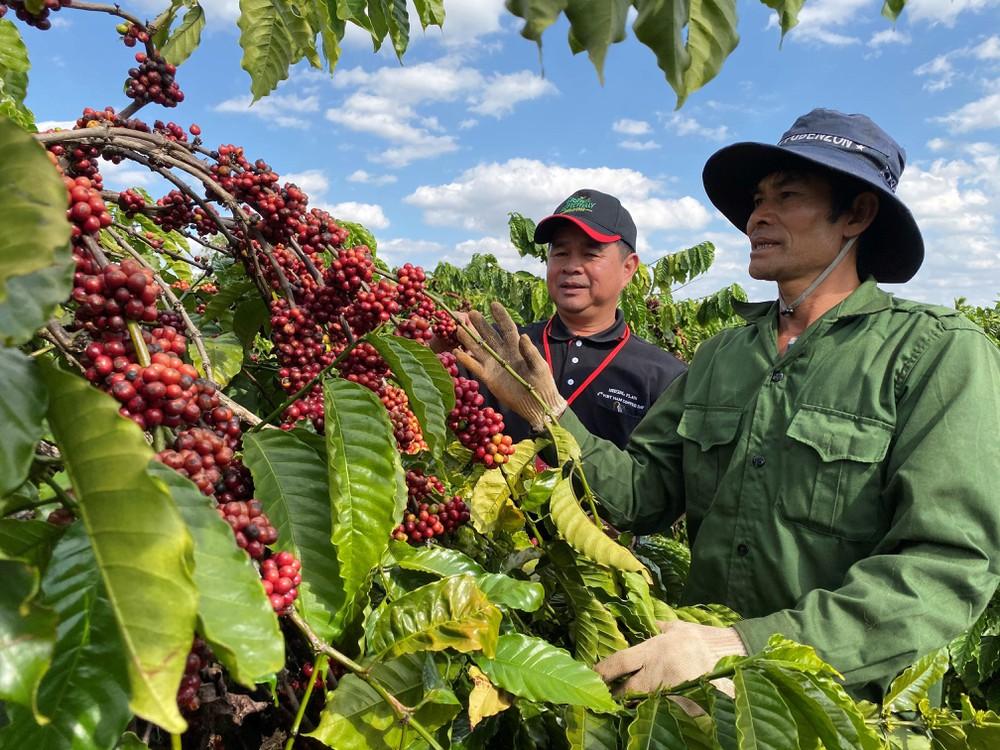 Dự án Nescafe Plan hỗ trợ phát triển cà phê bền vững được triển khai từ năm 2010 tại hơn 10 quốc gia, trong đó có Việt Nam. Người nông dân được hỗ trợ về tập huấn khoa học kỹ thuật và trang bị phần mềm FARMS nhằm quản lý dữ liệu trực tiếp của trang trại. | Ảnh: Agrinews