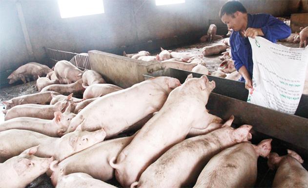 HTX Tiên Dương xây dựng mô hình chăn nuôi – trồng trọt khép kín. Ảnh: thoibaokinhdoanh.vn.