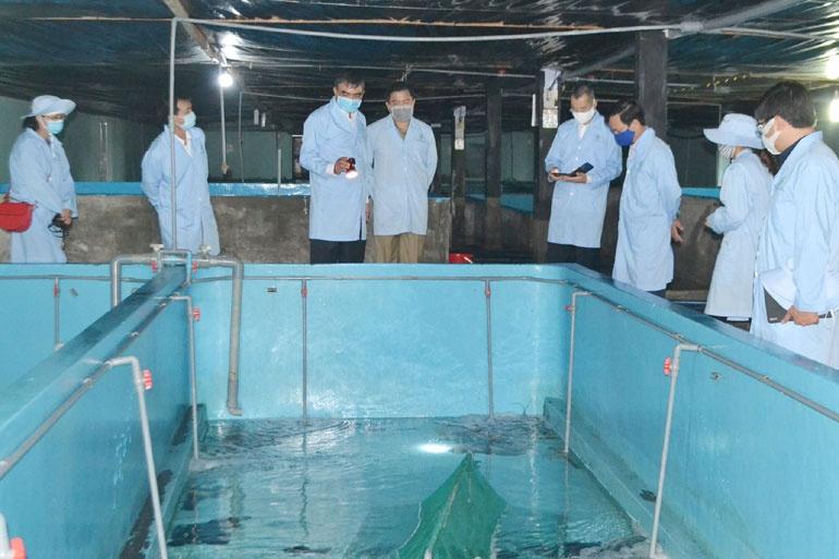 Mô hình nuôi tôm thương phẩm trong bể xi măng mà Công ty TNHH Thủy sản Đắc Lộc triển khai. Ảnh: Đắc Lộc.