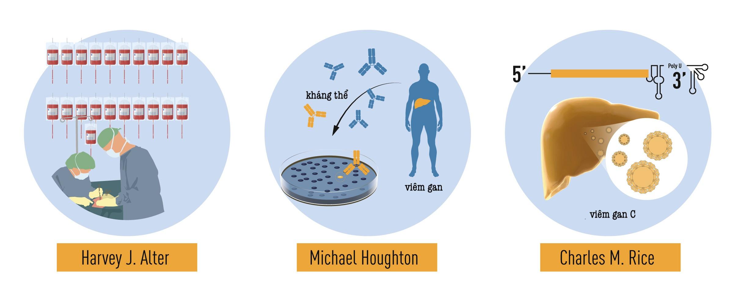 Đóng góp của 3 nhà khoa học vào giải Nobel Y học năm nay: Các nghiên cứu có phương pháp về bệnh viêm gan liên quan đến truyền máu của Harvey J. Alter đã chứng minh rằng một virus chưa được biết đến là nguyên nhân phổ biến của bệnh viêm gan mạn. Michael Houghton đã sử dụng một chiến lược mới để phân lập thành công hệ gene của loài virus mới được đặt tên là virus viêm gan C. Charles M. Rice đã cung cấp bằng chứng quyết định cho thấy một mình virus viêm gan C có thể gây ra bệnh viêm gan.