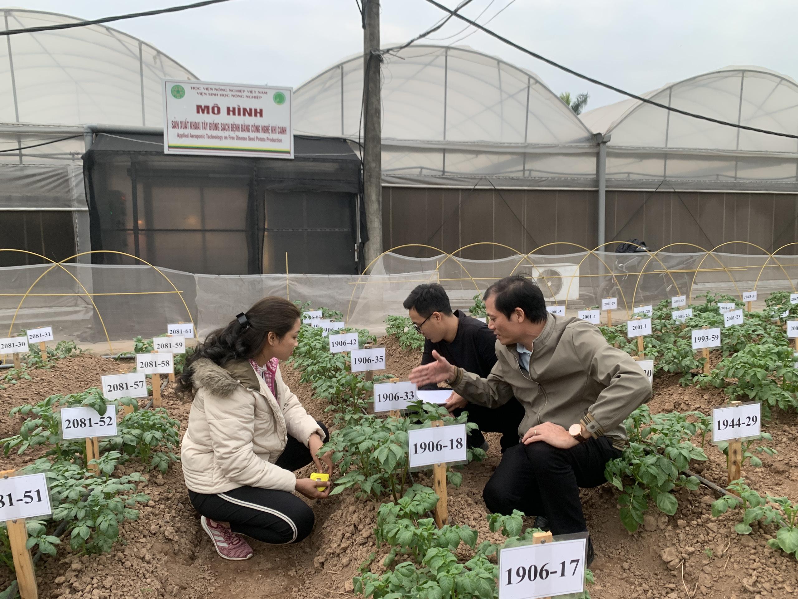 KTS Nguyễn Xuân Trường hướng dẫn sinh viên quy trình chọn tạo giống khoai tây.