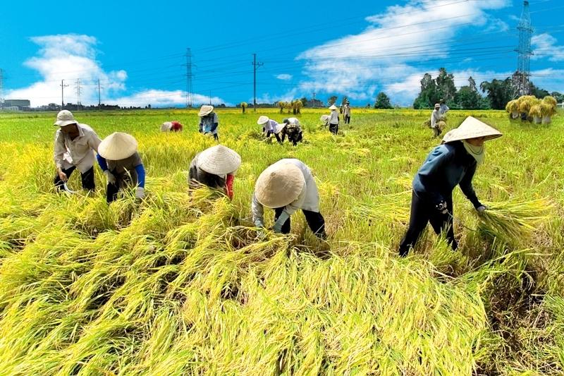 Thủ tướng Nguyễn Xuân Phúc: Kinh tế tập thể, HTX chưa phát triển tương xứng với tiềm năng